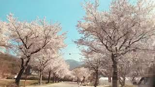양평 벚꽃드라이브 숨은명소
