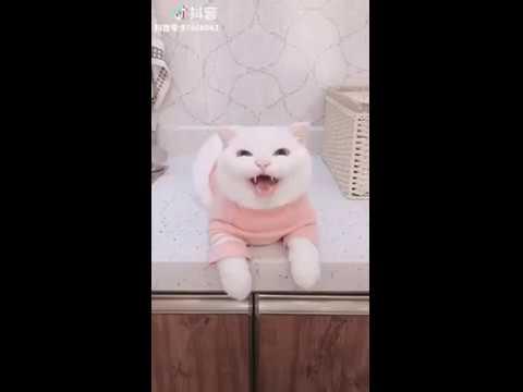 Cat Series: My cat's angel smile