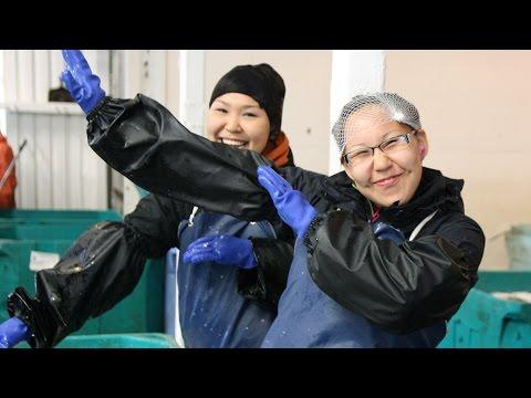 Fish processor employs hundreds from the Yukon Delta