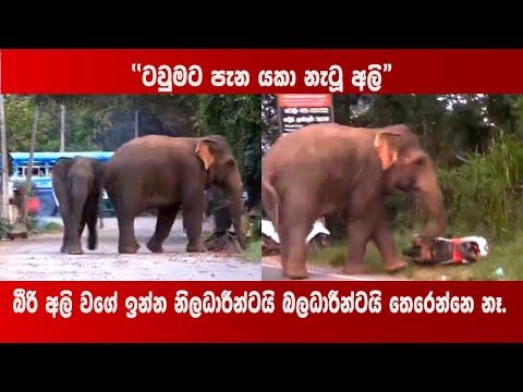 ''ටවුමට පැන යකා නැටූ අලි''  | Human Elephant Conflict | Mahiyangana - Sri Lanka