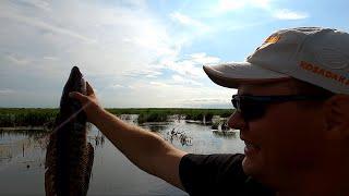 Приморский монстр Моя первая рыбалка на змееголова 2021