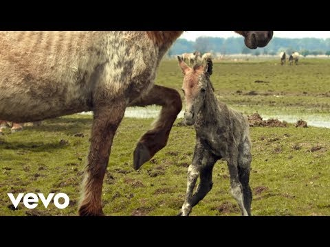 Marco Borsato - Mooi (official video)