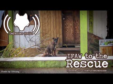 447: IFAW to the Rescue