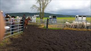 Ranch sorting 4