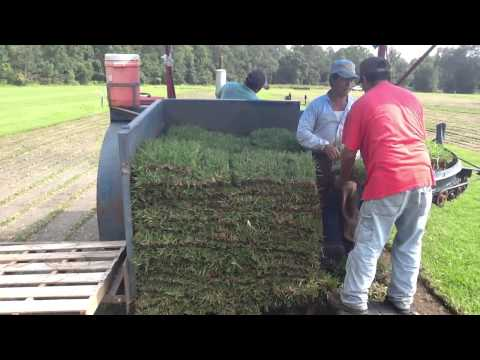 How To Harvest Sod