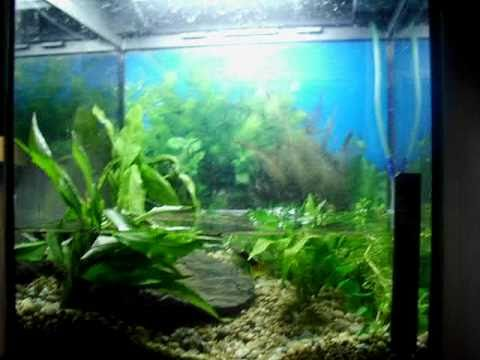 New Oriental Fire Bellied Toad - Fire Belly Newt Tank With ...