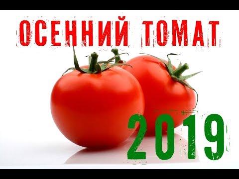 Осенний томат. Финал