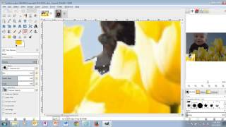 Baby Tulips - GIMP 2.8 - Tutorial