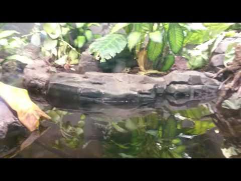 Parc zoologique de Vincennes - serre tropicale