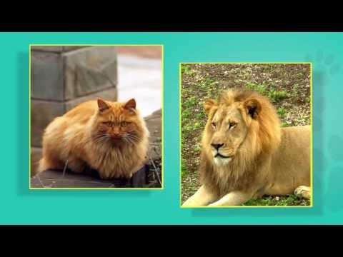 Pet Care Basics