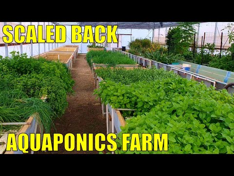 Aquaponics Farm | A Scaled Back Commercial Aquaponics System