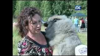 Межрегиональная выставка собак прошла в Вологде