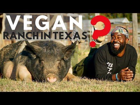 This TEXAS VEGAN RANCH Saves Every Farm Animal!