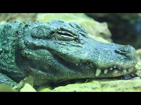 Albuquerque Zoo Vlog //001