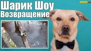 Шарик Шоу - Шарян читает реп. Петрович сыкло (выпуск 40)