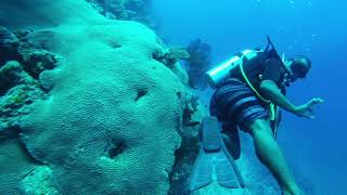 Mana Island Dive With Reef Sharks