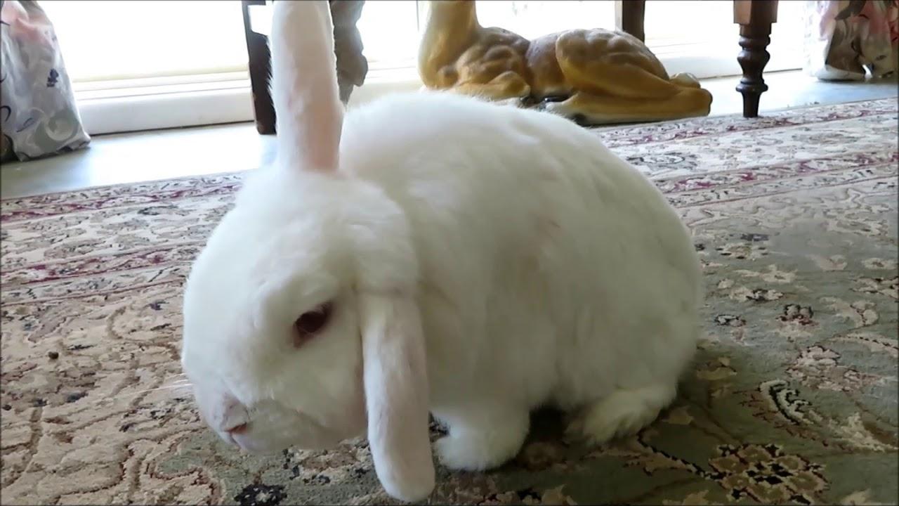 Rabbit rescue | Olinda | Rabbit Run-Away Orphanage