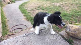 Cute/Funny dog fails to walk stairs