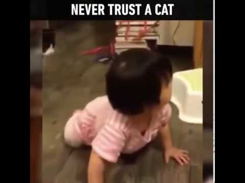 don't trust cat's