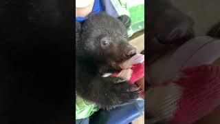 반달곰 육아/분유먹는 …