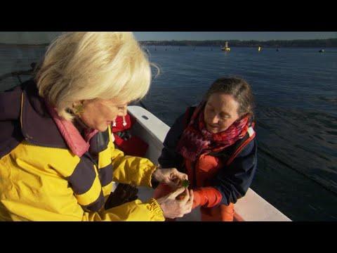 Sampling fresh-picked sea lettuce