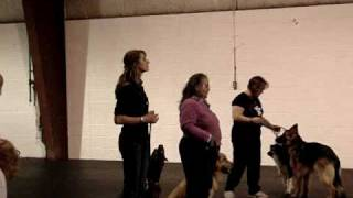 Rally Obedience Novice A - Our First Trial