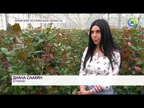 «Женский месяц»: в Армении до 7 апреля женщинам массово дарят цветы