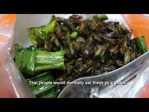 Thai Street Food – Bugs and Worms