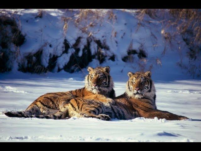 《老虎大地》那些保護老虎的勇者們。《老虎大地》3月31日,週日 晚間8點首播。