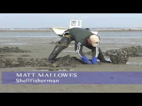 Shellfishing On Monomoy (Complete Documentary)