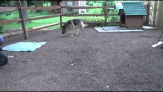 Dog Potty Area Bobs Pet Stop