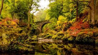 Relaxing Celtic Music | Foley Bridge | Beautiful Irish Flute & Guitar
