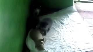 Спасите милых котят