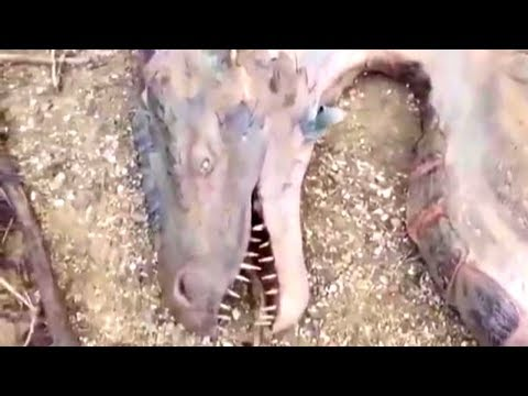 Dragon Found in Indonesian Forest + Dragons Caught on Tape