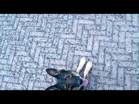 addestramento cani/dogsport condofuri marina (rc)/street training