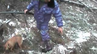 Карело-Финская Лайка. Охота на норку