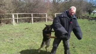 K9 Xena Tricep Bite And Out Control