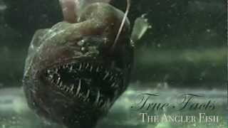 True Facts About The Angler Fish thumbnail