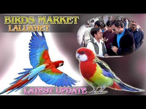 Birds Market Lalukhet Latest Update Jamshed Asmi Informative Channel In (Urdu/Hindi)