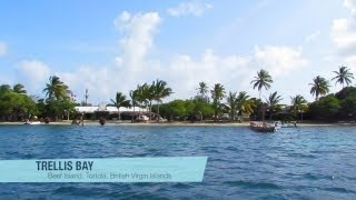 Backyard Scenes - Trellis Bay Part 1, Tortola, British Virgin Islands, Caribbean