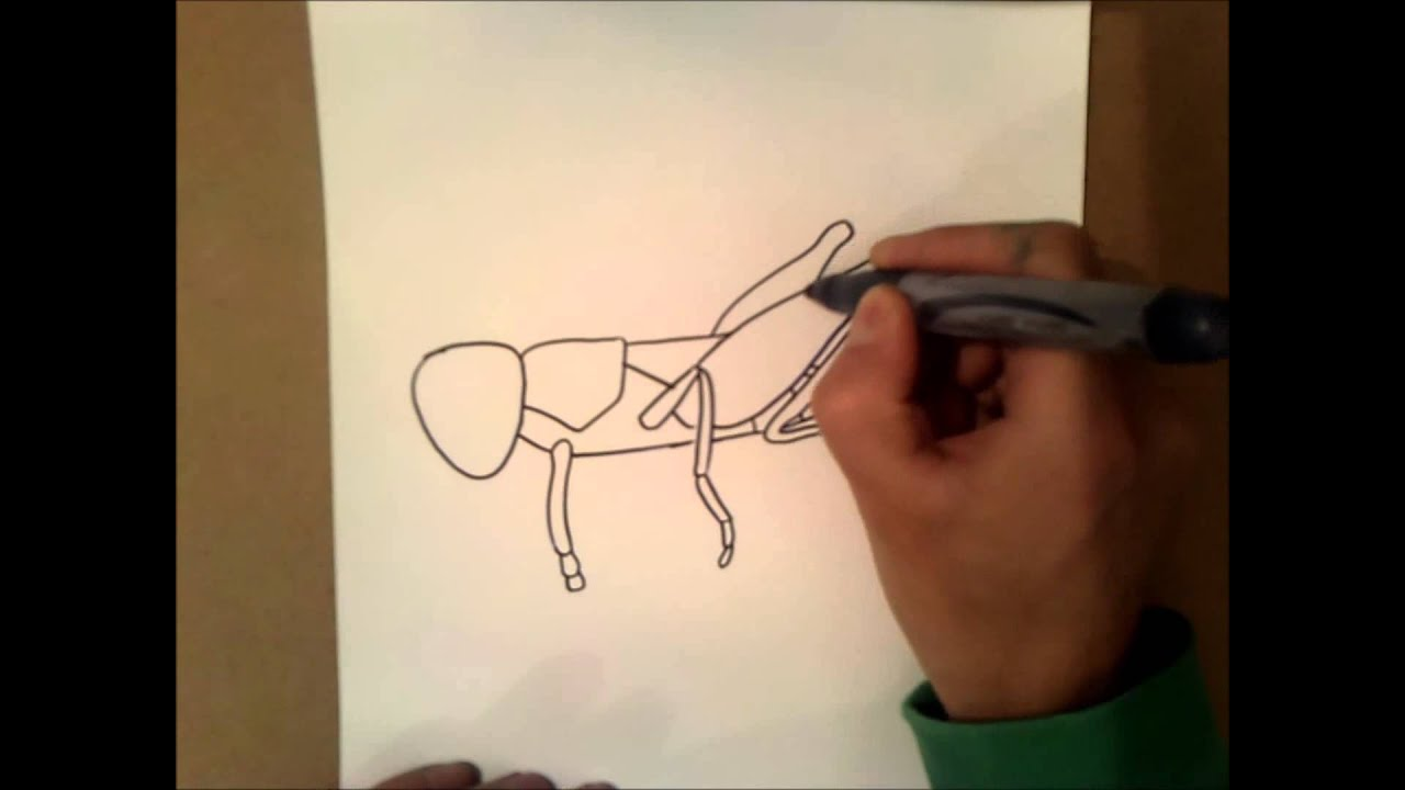 How To Draw A Grasshopper Youtube