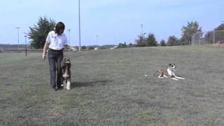 Two Dogs Off Leash Training At The Park & Playing Frisbee & Dancing