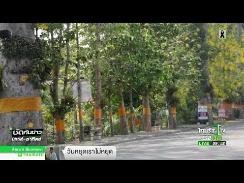 ย้อนหลัง เชียงใหม่ ถนนต้นยางกำลังจะตาย | 30-04-60 | ชัดทันข่าว เสาร์-อาทิตย์
