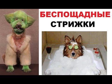 Беспощадные собачьи прически. Собака всех матом посылака и собака черепаха ниндзя