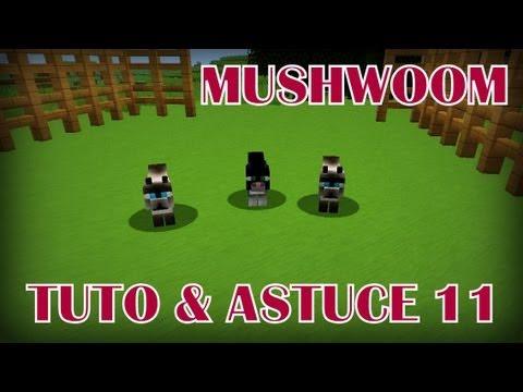 Minecraft : Comment Apprivoiser un Ocelot