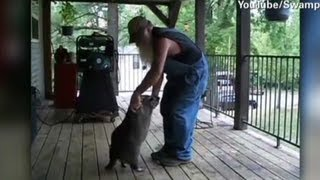 Redneck and plump raccoon cut a rug