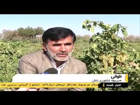 Iran Khash county, Agriculture products in desert محصولات كشاورزي در بيابان شهرستان خاش ايران