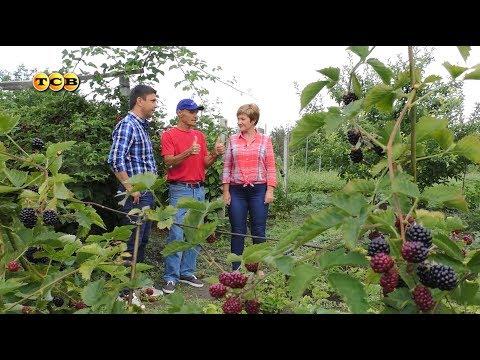 Все о выращивании клубники украина 659