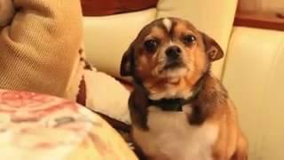 Грустная собака((В этом видео хозяйка ругает свою маленькую собачку, говорит ей, что бы она шла в будку, собака же жалостно..., 2015-12-24T11:47:52.000Z)