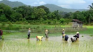 Laos 2014